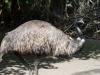 Zoo_emu