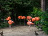 Zoo_flamingo