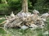 Zoo_pelikan_skaliert