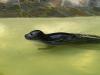 Zoo_seehund